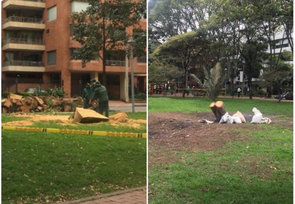 ¿Masacre de árboles en El Virrey?