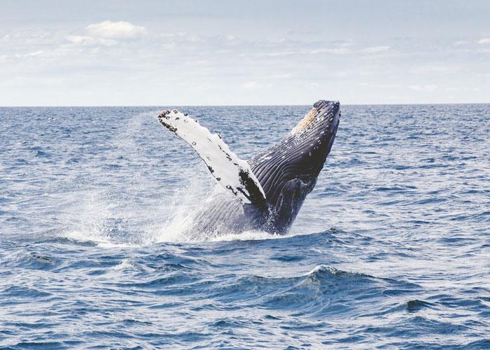 Relájese y vaya a ver ballenas
