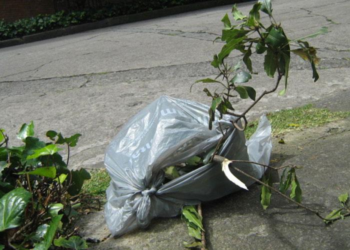 El desperdicio de bolsas de Promoambiental