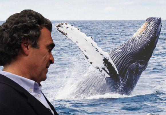 Viendo ballenas