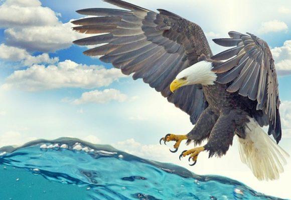El renacer del águila