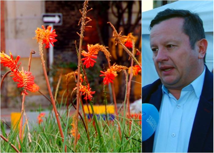 Centro de Bogotá se revitaliza con 500 metros cuadrados de jardines