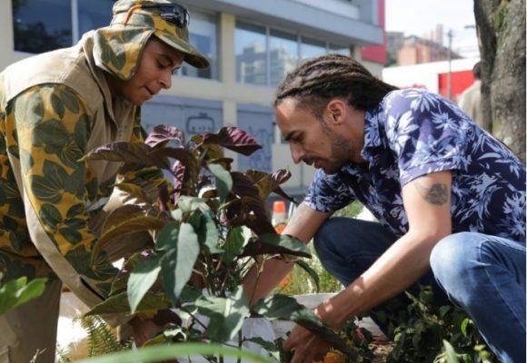 Árboles vs. cemento: los paisas quieren convertir su ciudad en una de las más verdes del mundo