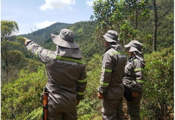 Los guardianes que cuidan el agua y los bosques de Medellín