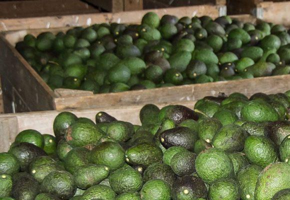 La apertura de la economía colombiana en tiempos del coronavirus