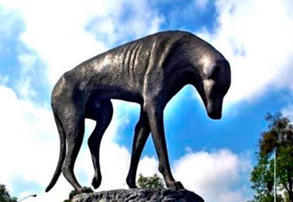 'Peluso', el perro callejero sordo y enfermo
