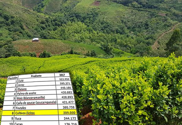 La coca entró al top 10 de los principales cultivos de Colombia