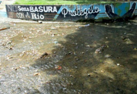 Marraneras ponen en peligro habitantes de Santander de Quilichao.