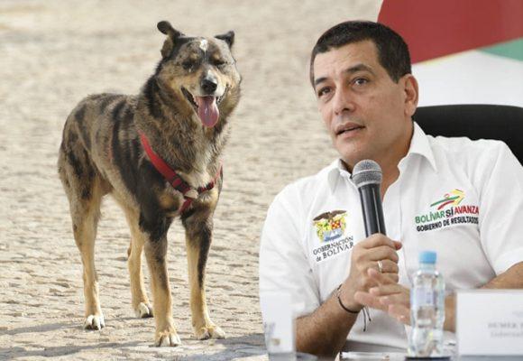 Una vergüenza, la propuesta para mascotas de Dumek Turbay