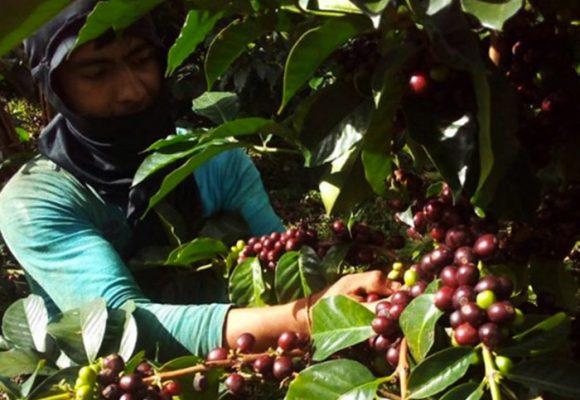 De la amapola al café, la historia detrás de las fotos que toma Astrid Medina