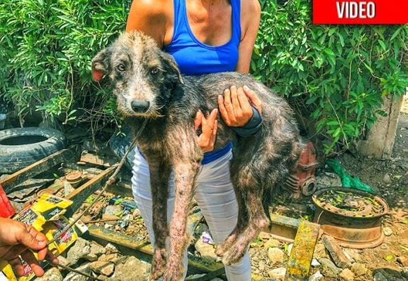 Adopta, no compres: la segunda oportunidad de los perros callejeros