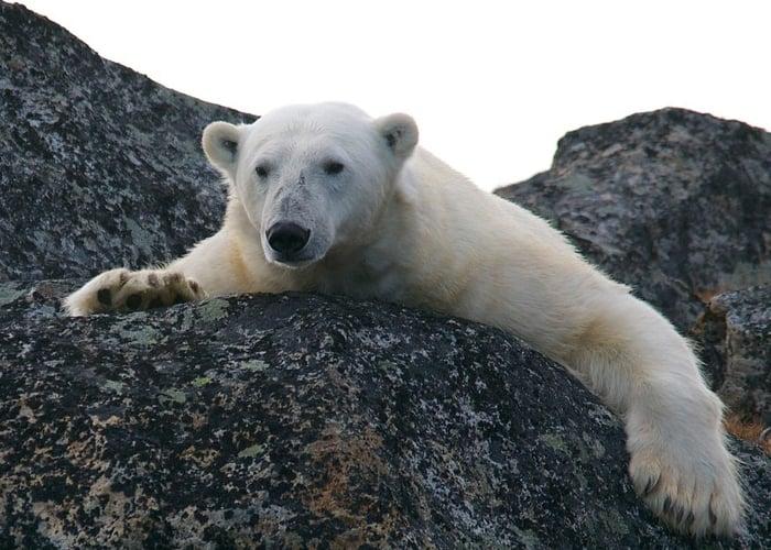Urge limitar el calentamiento global hasta 1.5ºC para evitar catástrofes: alertan científicos