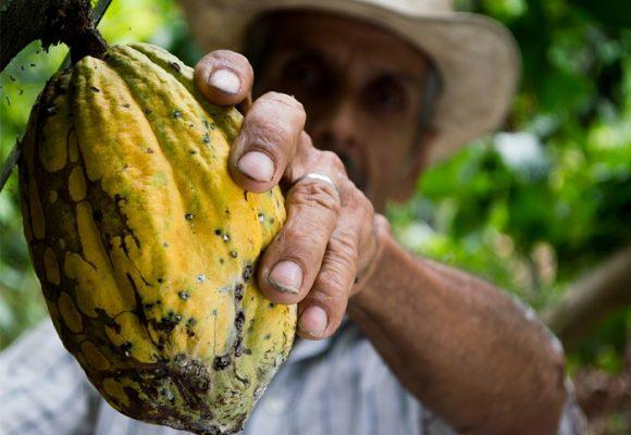 ¡Garanticemos para siempre nuestra seguridad alimentaria!
