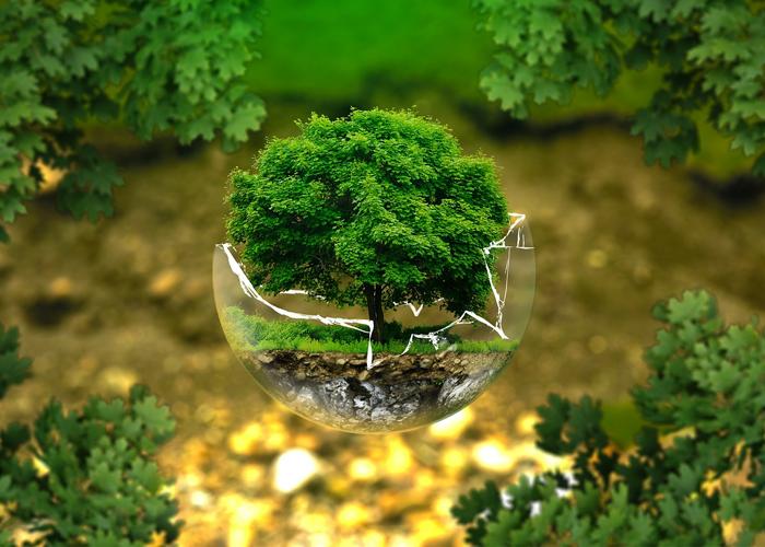 Problemática ambiental, entre el orden ecosistémico y el desorden cultural