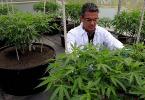 Cannabis Made in Colombia se valoriza 262%