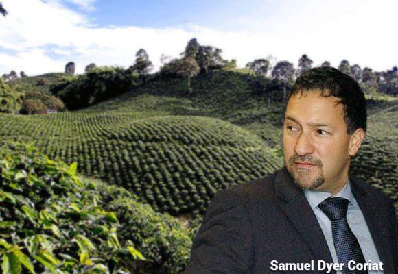 El aguacate, el nuevo milagro del agro colombiano