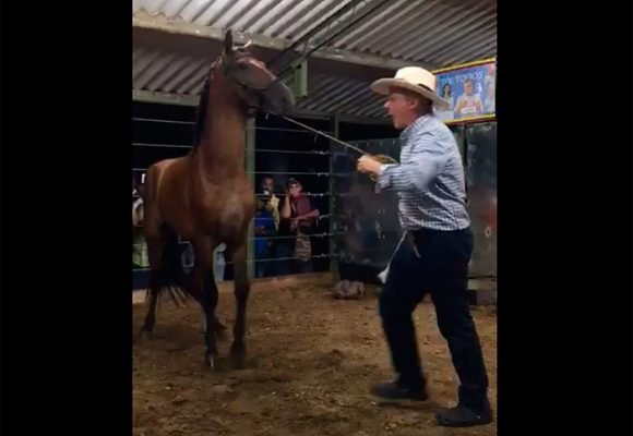 Uribe, el amansador de caballos [Video]