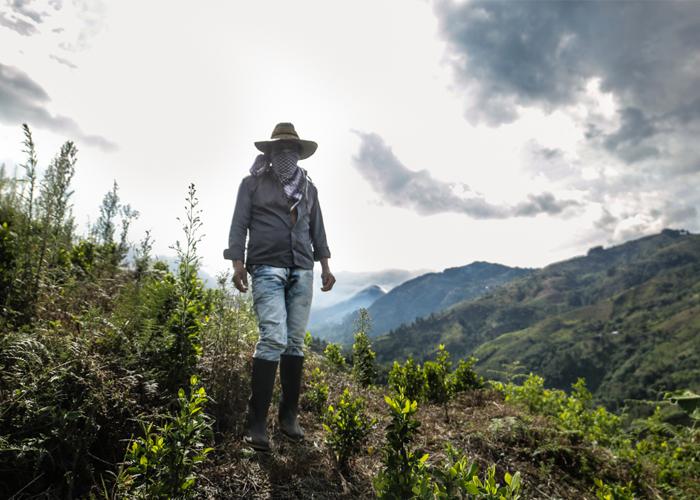 El Cauca y la coca: una conversación postergada