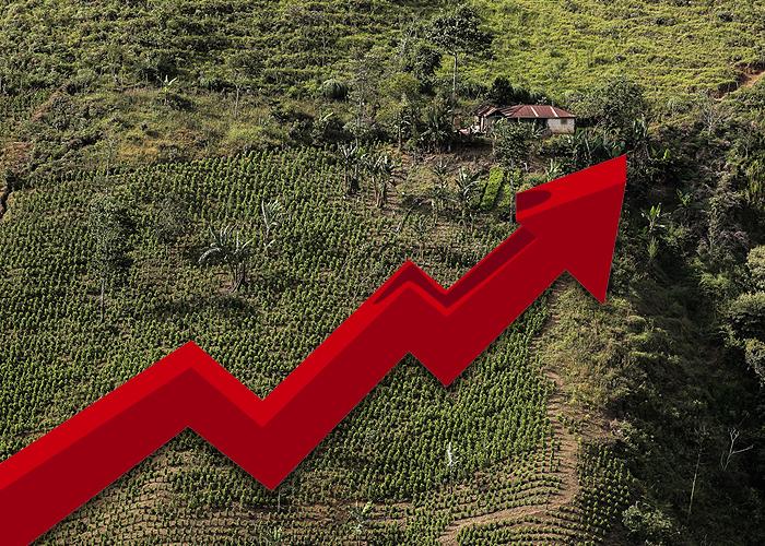 La ley de la oferta y la demanda disparó la coca en Colombia
