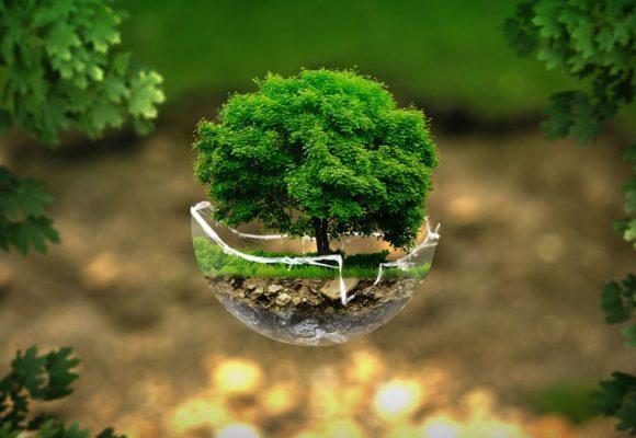 Vinculando la ecociudadanía a la realidad territorial