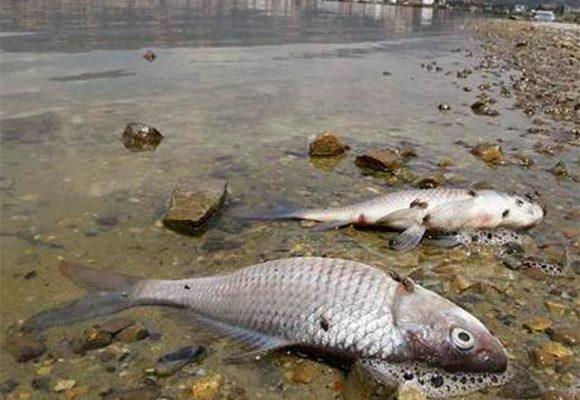 El último pecado de Hidroituango: se seca el río Cauca