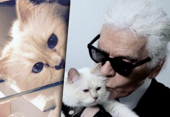Choupette, la heredera felina de Karl Lagerfeld