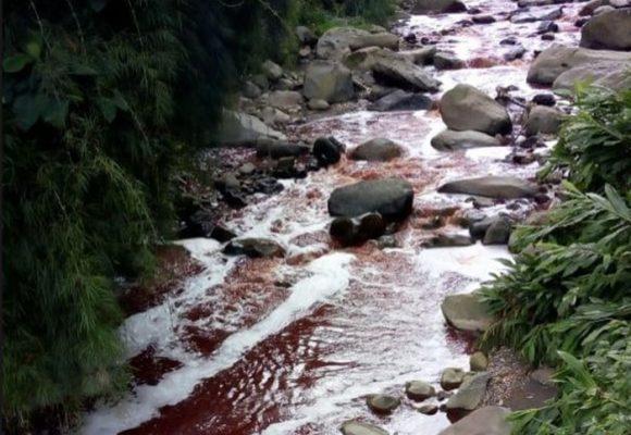 Mientras el río Cauca se está muriendo, la quebrada Olivares sangra