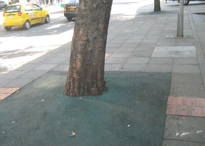 A los árboles de Bogotá no solo los talan, también los asfixian