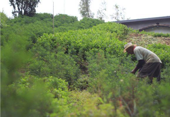 ¡A pueblear! Medellín le apuesta a internacionalizar su campo