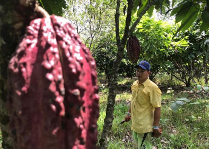 Poscoronavirus: ¿surgirá en Colombia una nueva formación social?