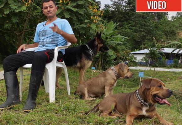 El otro proyecto productivo que les salió a las FARC