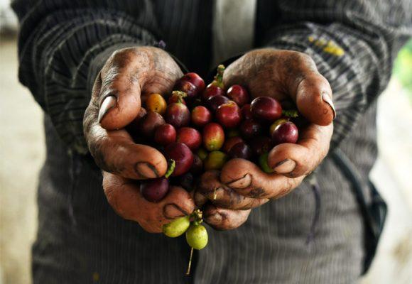 Las amenazas del Covid-19 al café colombiano