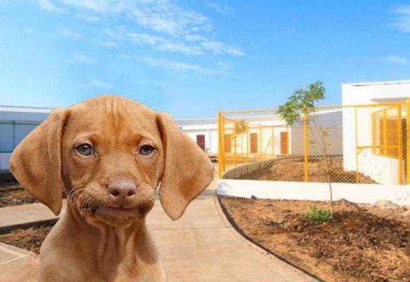 Animalistas se declaran en máxima alerta con El Guardián