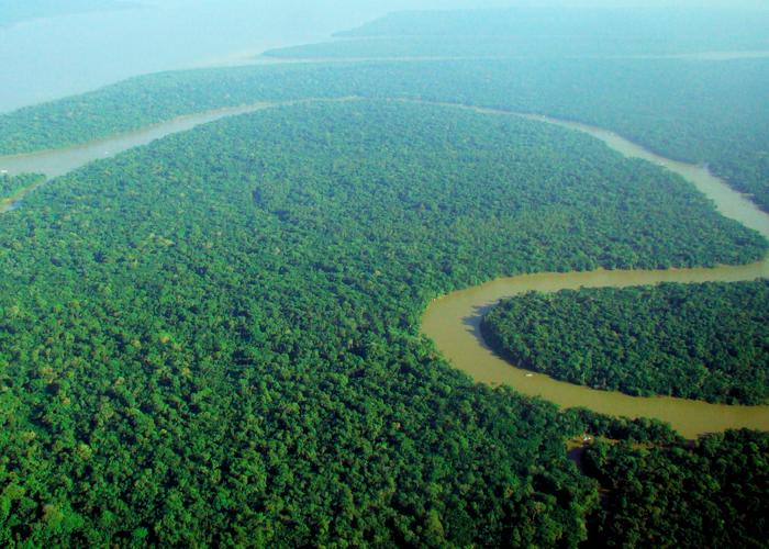 ¿Qué está pasando con la sentencia que protege nuestra Amazonia?