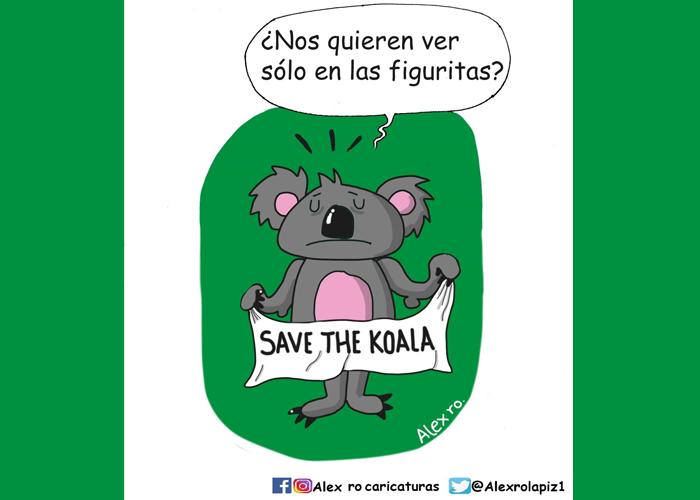 Caricatura: ¿Adiós, koalas?
