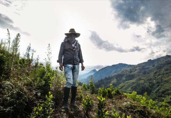 El Cauca, a merced de las mafias transnacionales