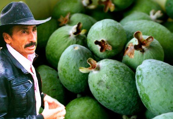 Feijoa, la fruta que le cambió la vida a los campesinos de Boyacá