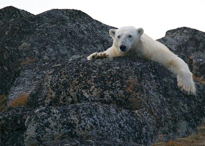 De la degradación ambiental y la contundente amenaza climática
