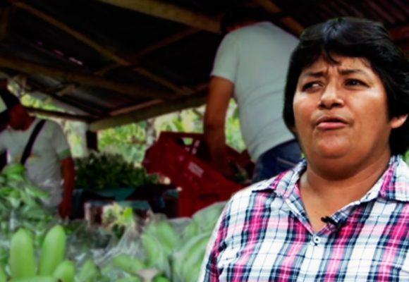La campesina que cambió la vida de 1.200 familias a punta de banano