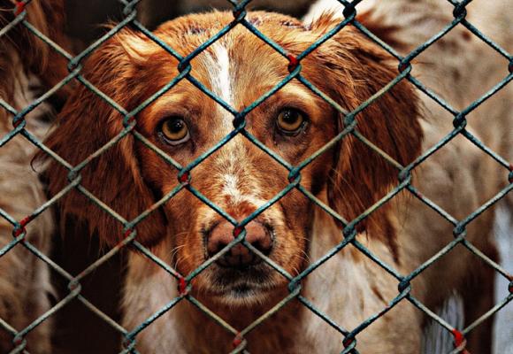 Evitar el maltrato animal, responsabilidad de todos