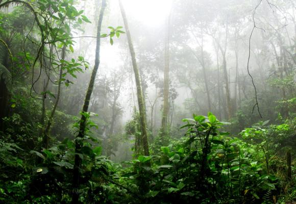 Del Amazonas en llamas, el capitalismo y la posverdad
