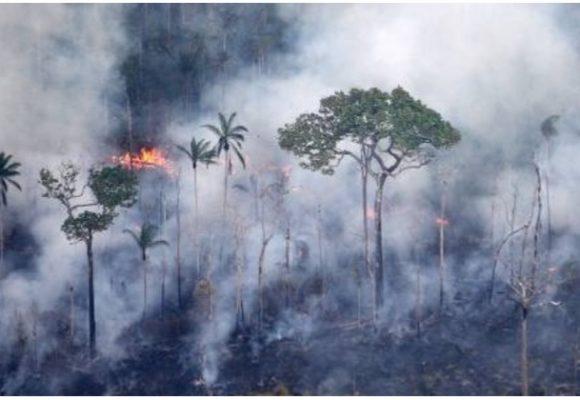 El fuego en las selvas amazónica y colombiana