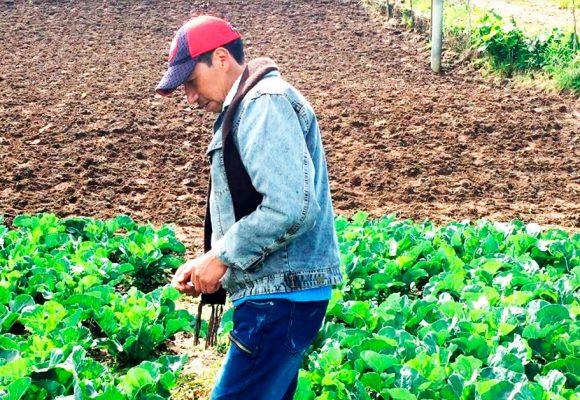 El lugar de Colombia en donde el brócoli le ganó a las balas
