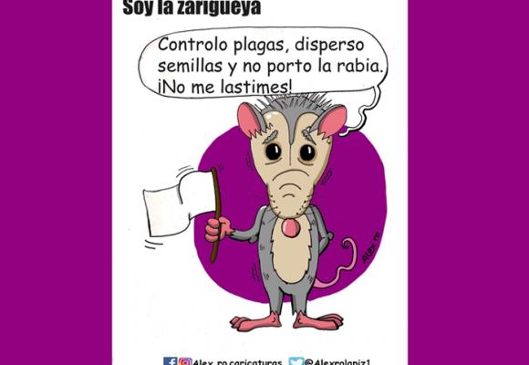 Caricatura: Soy la zarigüeya