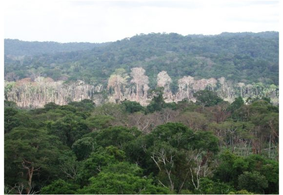 ¿Con qué dinero se protegerá la selva amazónica?