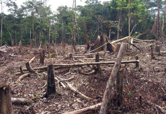 La deforestación sin control tiene en riesgo nuestros ecosistemas