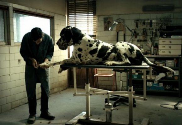 Dogman, la nueva joya de Matteo Garrone