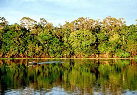 Amazonas: soberanía del consumidor y crisis ambiental