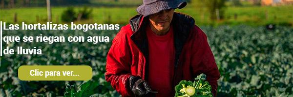Las hortalizas bogotanas que se riegan con agua de lluvia