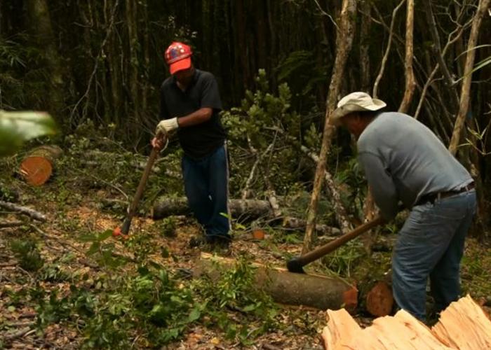 Desde el 2014 se han deforestado 720 mil hectáreas de bosques